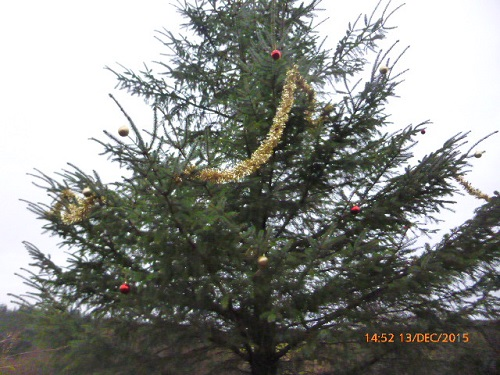 Decorating the big tree at Frugaldom
