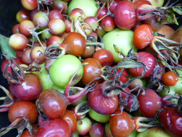 Foraged crab apples and rosehips