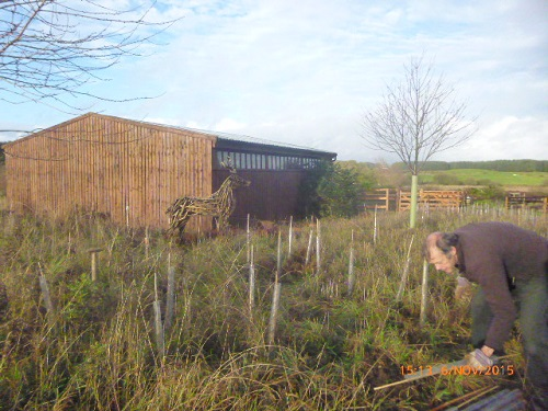 Edible hedge planting at Frugaldom