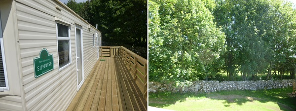 Wooden wraparound decking, drystone wall and sycamore trees