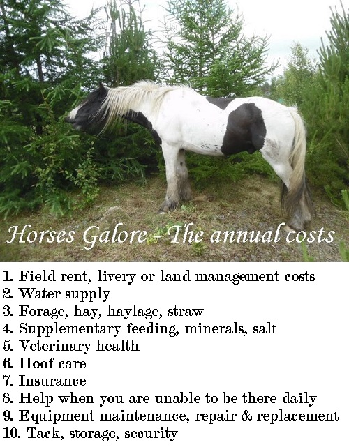 How much does it cost to keep a horse