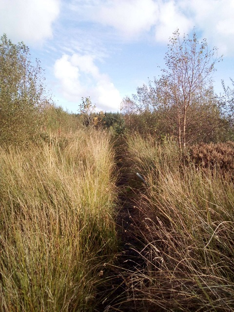 The edge of the new woodland